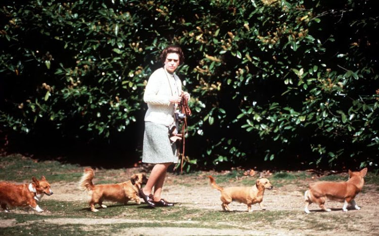 Queen Elizabeth II walking her dogs in 1973 with a corgi leading the way and another ushering from behind.