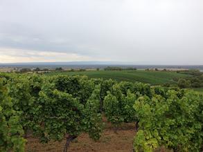 Photo: Vom Weintor aus hat man eine schöne Sicht über das Pfälzer Weingebiet über den Rhein bis zum Schwarzwald.