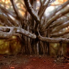by Dipankar Bose - Nature Up Close Trees & Bushes