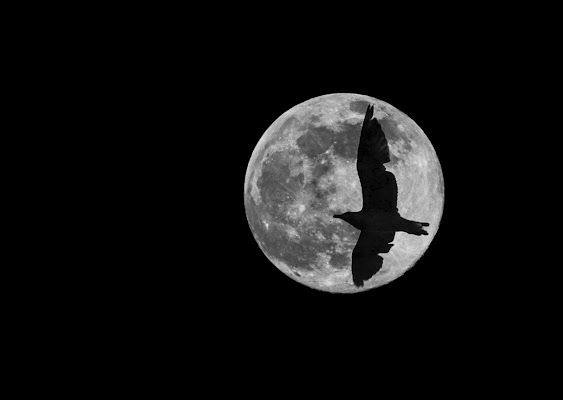 Il Volo di paoloYY