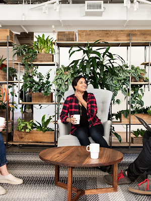 Three people laughing around an office coffee table with shelves full of plants in the background