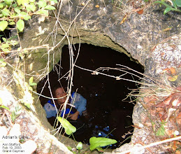 Photo: Adrian's Cave, looking down into the water, from a hole in the roof,  edge of Ironwood Forest, Grand Cayman. Photo: Ann Stafford, Feb. 19, 2003