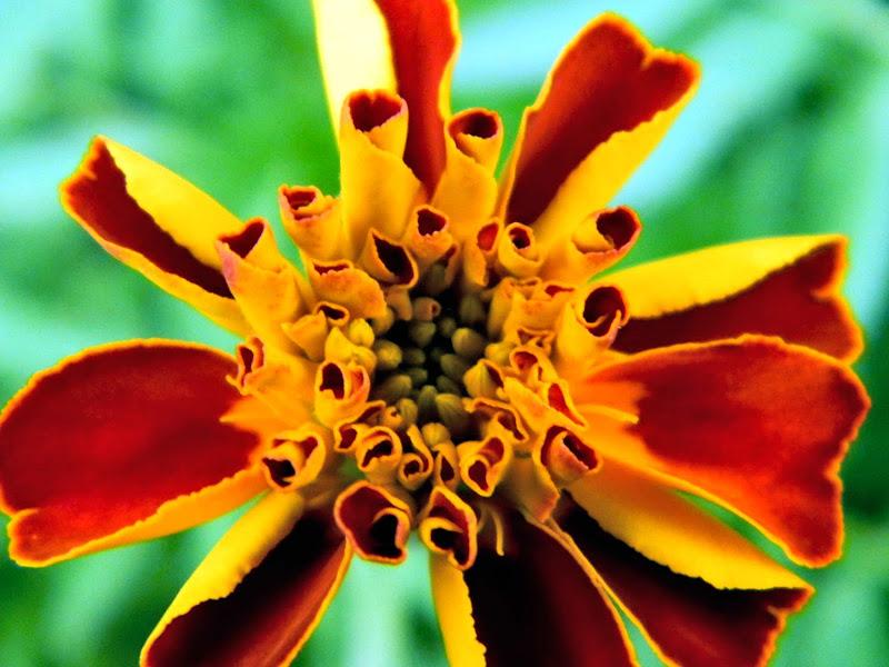cuore di fiore di Bubu1980