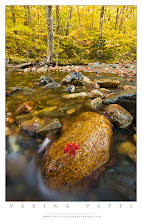 "Photo: Stranded  #PhotographyTips, #Travel, #NewHampshire, #Autumn  Do you ever crouch down low and set up your tripod close to the ground? I do it all the time. Here's an example of why I do it.""  This lovely autumn scene drew my attention because of the brilliant gold color scheme - and the single, red leaf on the rock. Actually, there was a pretty maple tree just behind me, and it's red leaves were scattered all over the ground at the edge of the river... but when I stood in the water with my back to the maple, this leaf seemed to stand alone against all that gold.  It's a subtle composition - I didn't want the leaf to be glaringly obvious within the frame. Just a bit of simple beauty in an Autumn scene. New Hampshire is beautiful in Autumn... as you can see. :)  For this shot, I got down very low with my tripod to bring the rock in the foreground as close to my wide-angle lens as possible - which increases it's relative size within the frame. Getting low also served to ""foreshorten"" the midground, so that I could include more trees in the upper part of the frame. Standing up with my tripod would have made the river seem to be wider... and would have forced me to chose between all that lovely gold in the background and the large rock in the foreground.  I made sure the entire rock was included in the foreground, so that it wouldn't feel cropped, and so that the stream could flow around it. I chose a shutter speed that would allow the water to blur a bit in the foreground - I wanted to remove details and create a slightly surreal effect in the water.  As for the rules of thirds - well... the edge of the river is at the top third, but the leaf and the rock are centered in the bottom third. I felt that using the rule of thirds in this case would leave the image feeling heavy on one side. I only use the rule of thirds when it feels right. ;) I'm a firm believer in breaking all the rules whenever it feels right to do so."
