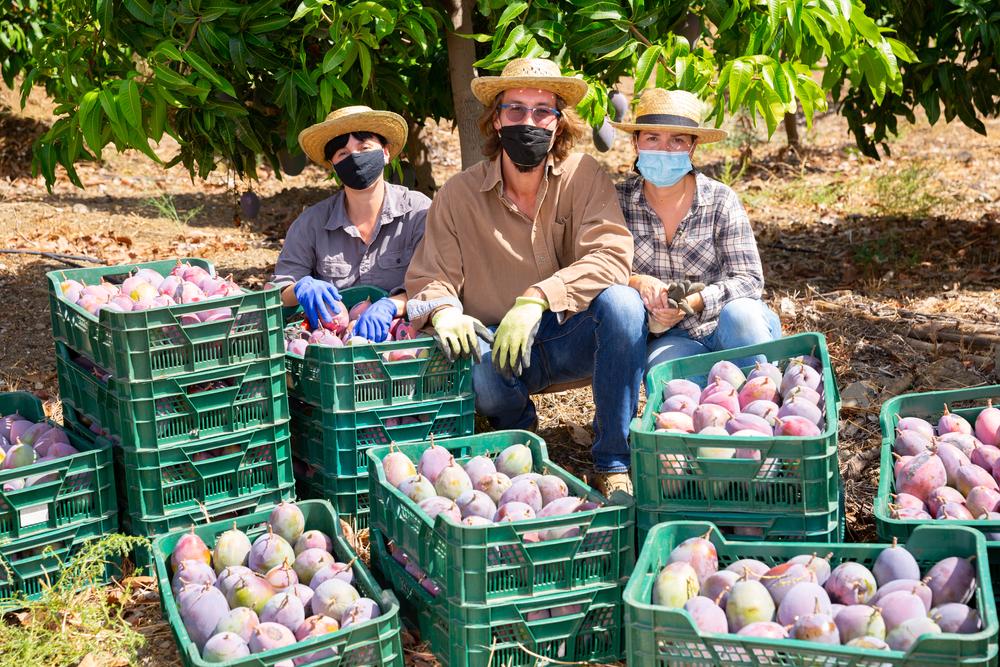 Demanda de fertilizantes continuou firme durante a pandemia. (Fonte: Iakov Filimov/Shutterstock)