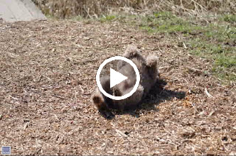 Video: Sam is gek op houtsnippers. :)