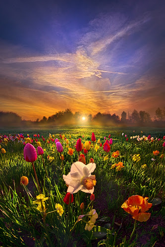 Wherever The Journey Takes Us by Phil Koch - Landscapes Prairies, Meadows & Fields ( vertical, farmland, yellow, leaves, love, sky, tree, nature, weather, perspective, flowers, light, orange, art, twilight, agriculture, horizon, portrait, dawn, environment, season, serene, trees, lines, inspirational, wisconsin, natural light, daffodlils, ray, beauty, tulips, landscape, phil koch, spring, sun, photography, farm, life, horizons, inspired, clouds, office, park, beautiful, scenic, morning, shadows, field, spring colorful flowers, red, blue, amber, sunset, peace, meadow, summer, beam, sunrise, earth, garden,  )