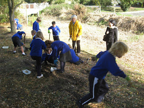 Photo: Bridge school planting bulbs October 2011
