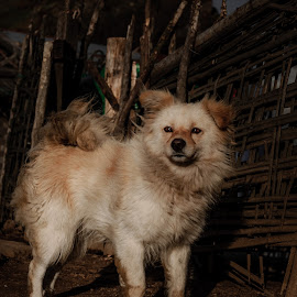 Alert by Akashneel Banerjee - Animals - Dogs Portraits ( nature, crying, sad, portrait, dog )