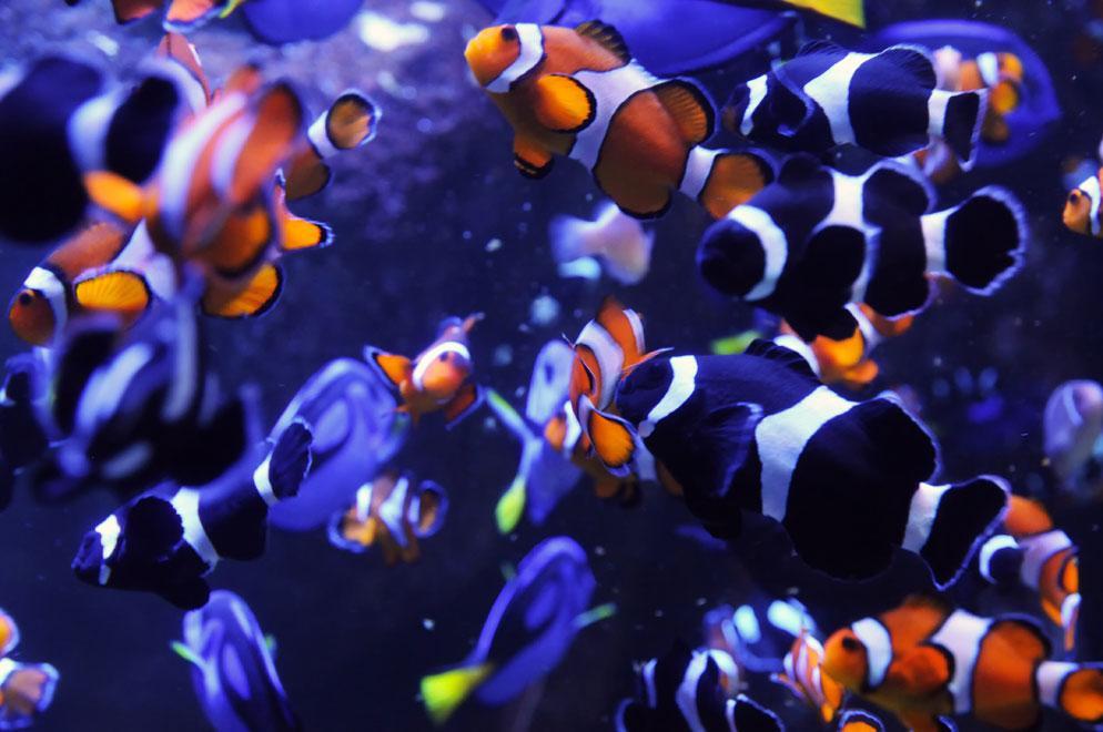 Aquarium Photography | How to Take Great Aquarium Photos | Nikon | Nikon
