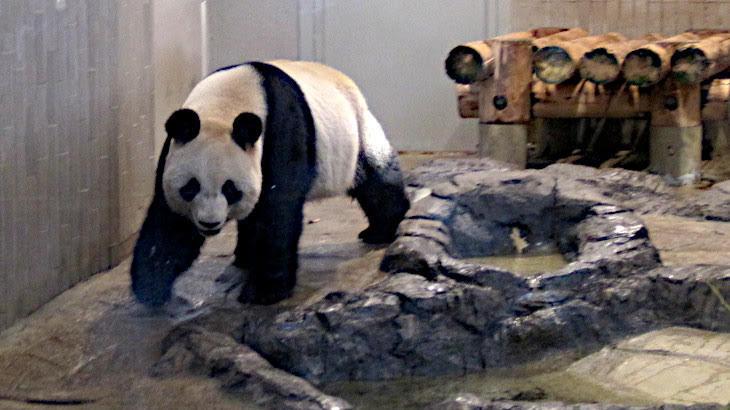動物園と水族館は本当に必要なのか