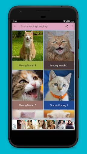 Download Suara Kucing : download, suara, kucing, Download, Kumpulan, Suara, Kucing, Lengkap, Android, STEPrimo.com