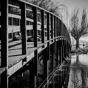 Pontes by Carlos Costa - Black & White Landscapes ( water, monochromatic, reflection, tree, black and white, aveiro, ducks, places, bridge, portugal, , relax, tranquil, relaxing, tranquility )