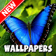 Download Butterfly Wallpapers HD For PC Windows and Mac