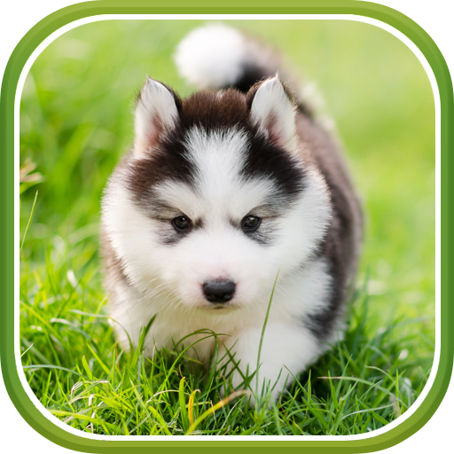 Cute Puppies Live Wallpaper Apps On Google Play