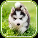 Cute Puppies Live Wallpaper APK