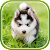 Cute Puppies Live Wallpaper file APK for Gaming PC/PS3/PS4 Smart TV