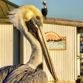 Bill & Ben by Stephen Lang - Animals Birds