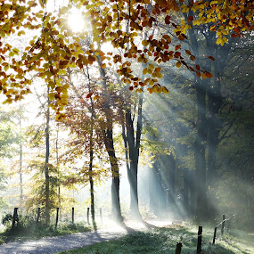 Good morning Sunshine ! by Gert de Vos - Landscapes Forests
