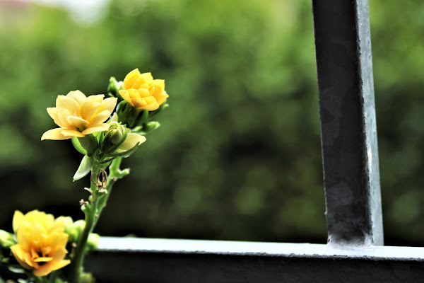la primavera continua ad esserci.. di AlexSandra