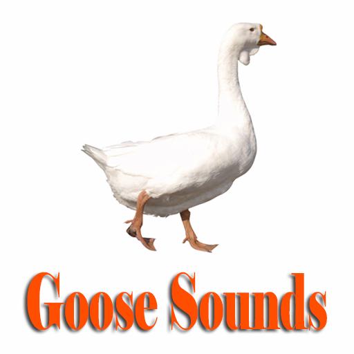 鵝聲音 音樂 App LOGO-APP試玩
