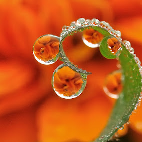 Orange Curve by Petrus Arif - Nature Up Close Water