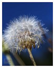 Photo: Eastern Sierras-20120717-799