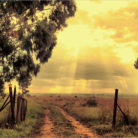 Farm gate at sunset by Marissa Enslin - Digital Art Places (  )