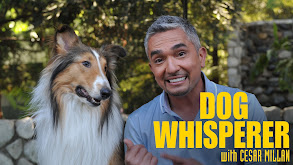 Dog Whisperer thumbnail