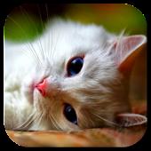 Pussycat Video Live Wallpaper