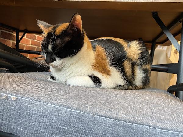 貓咪很親人很可愛,服務不錯,餐點也不錯。