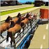 Animal City Truck Transport