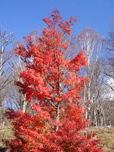 Photo: 2005年11月10日 紅葉  中禅寺湖の宿の紅葉  赤と青のコントラストが鮮やかだった。
