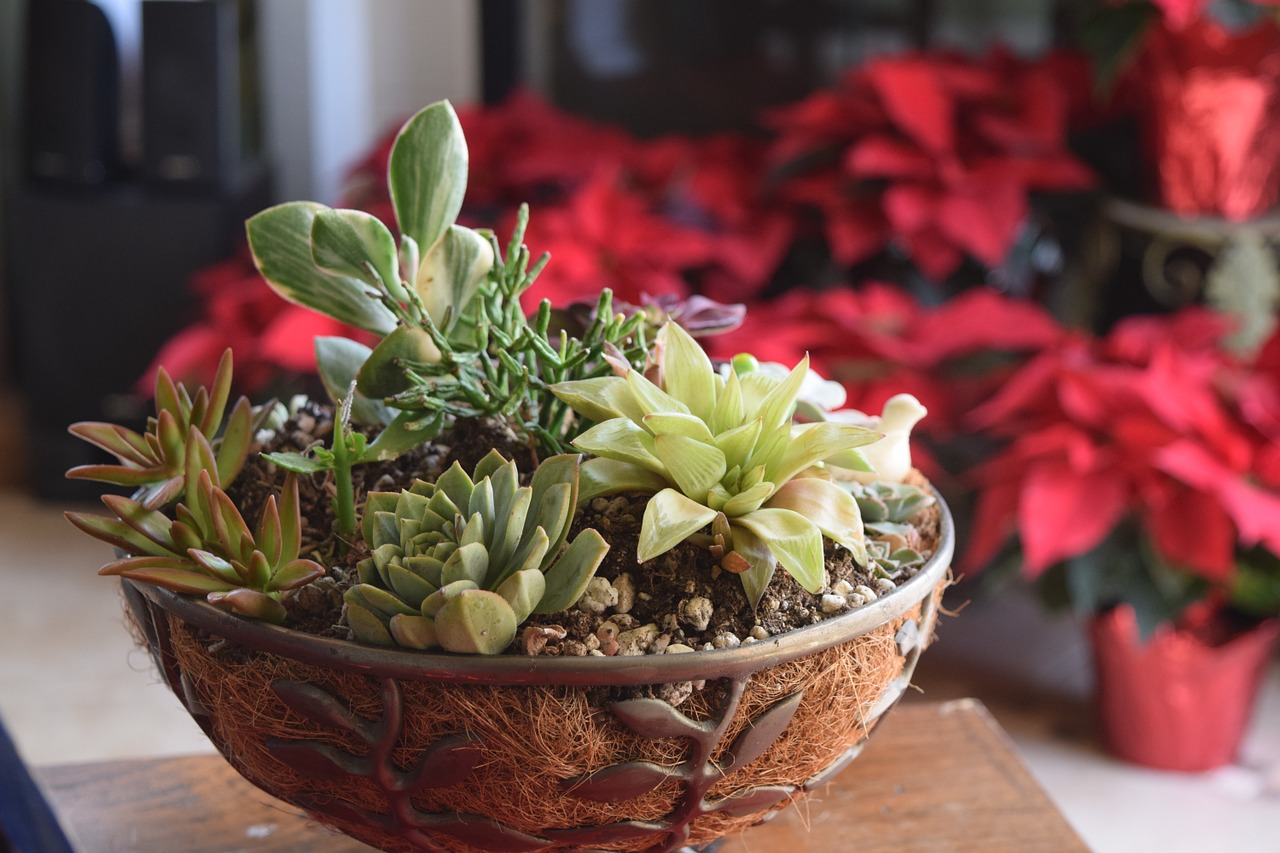 succulent-1167293_1280.jpg