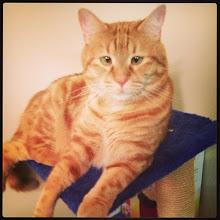 Photo: Cat relaxing... #intercer #cat #pet #play #water #paws #fur #funny #beautiful #eyes #life #love #cats #catsofinstagram #pets #post #orange #blue - via Instagram, http://instagram.com/p/YDo8lqJfg8/