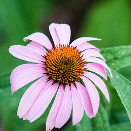 by Jennifer Blair - Flowers Single Flower (  )