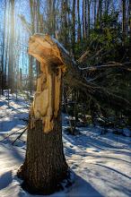 Photo: If a Tree Falls- Killington, Vermont
