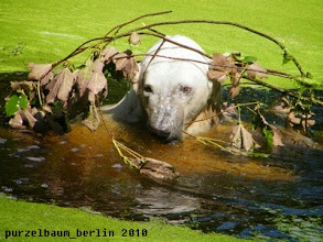 Photo: Knut mit extravagantem Kopfschmuck ;-)