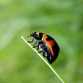 On The Edge by Adnan Hidayat Prihastomo - Instagram & Mobile Other ( macro, ladybug, insect )