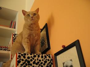 Photo: schöne Katze auf schöner Treppe! *g* (Katzenzimmer)