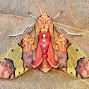 Neonerita bernardoespinozai moth