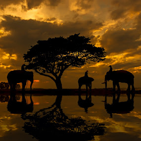 Silhouettes of elephants. by Visoot Uthairam - Animals Other Mammals ( cool, elephant, sun, asian, tree, fresh, color, shadow, outdoors, background, asia, sunrise, animal )
