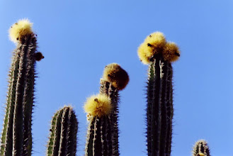 Photo: #006-Cactus