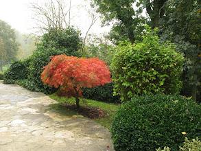 Photo: Acer palmatum planté par Foujita