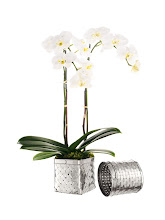 """Photo: ALBERTO PINTO Exclusively ours. Silver-plated cachepot collection with orchids by Zezé. Square cachepot. 5.75"""" high x 5.75"""" wide. $675, without orchid $500. Round cachepot. 5.75"""" high, 5.25"""" diameter. $625, without orchid $450. Seventh Floor. 212 872 2686"""