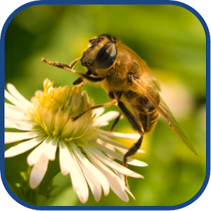 download Bee Cute Wallpapers apk