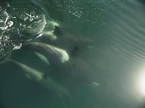 Photo: Orcas