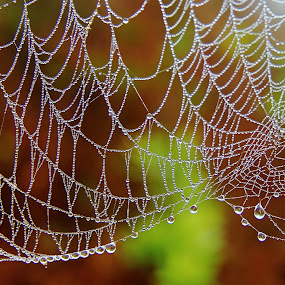 web patterns - feb edition by Shrikrishna Bhat - Nature Up Close Webs ( water drops, nature, sakleshpur, spider, web, , spiderweb )