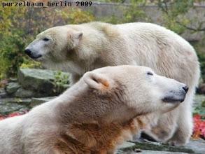 Photo: Knut und Gianna :-)