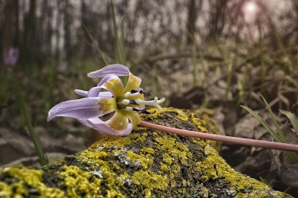 Primavera prealpina di luciano s